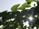 Global Jet Capital Launches CleanFlight Carbon Offset Program